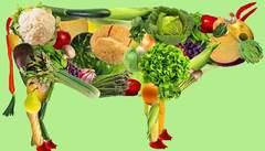 Cómo hacer una Dieta Vegetariana Equilibrada y Saludable