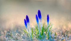 8 Consejos para Renovarse en Primavera