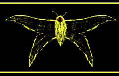 Moth Gone Melt
