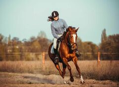 Horseback Riding Carries Big Risk for Serious Injury: Study