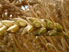 Health Tip: Best Grains And Starchy Veggies for Diabetics « Weekly Gravy