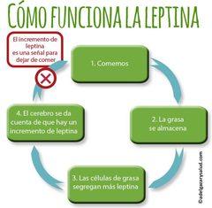 Todo sobre la Leptina: La Hormona del hambre