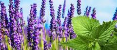 Propiedades de las plantas medicinales imprescindibles